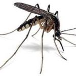 Best Bug Zappers (Electric Mosquito Killers)